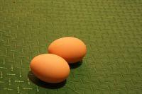 Und auch die ersten Eier lassen nicht lange auf sich warten.