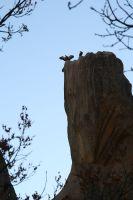 Geier beherrschen die Felsen in Manzanares